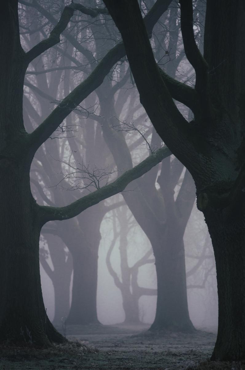 Eine Gruppe alter hoher Bäume mit ausladenden Ästen ist von Nebel umgeben. Es herrscht eine mystische, düstere Stimmung auf dem Bild. Die Aufnahme wurde von Fotografin Astrid Schulz in Bremen gemacht.